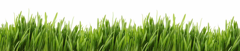 Gras-groeit-niet-SMALL
